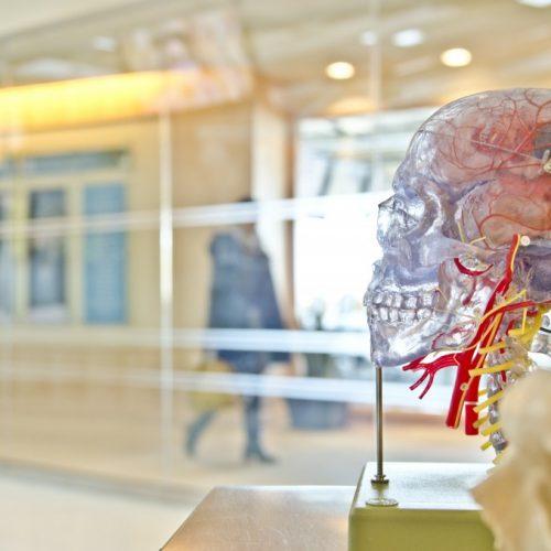 40-часова работна седмица – може ли да навреди на мозъка ви, ако сте над 40?