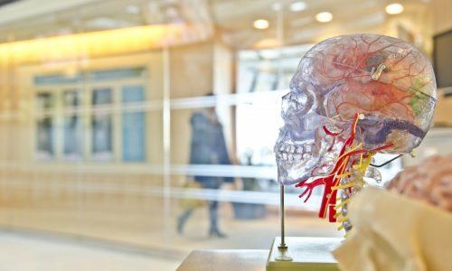 Как да избегнете грешките на мозъка и когнитивните предразсъдъци